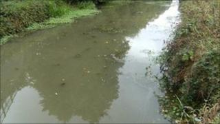 Polluted canal