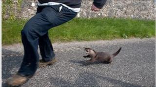 Otter attacks