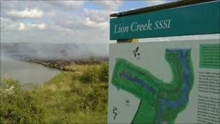 Lion Creek nature reserve after the fire