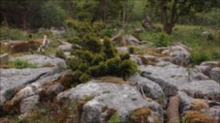 Warton Crag (picture courtesy LWT)