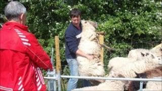 Sheep lookerers at the Severn Gorge Countryside Trust