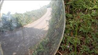 Overgrown hedges in Guernsey shown in a mirror