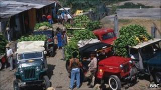 Banana lorries in Colombia
