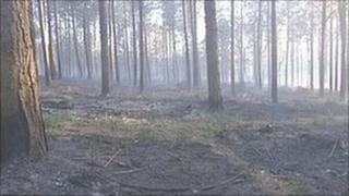 Million Wood which was damaged by fire