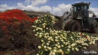 A digger unloads discarded vegetables in southern Spain