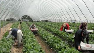 Seasonal fruit growers