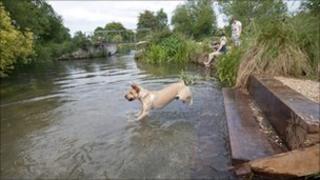 Dog dip on Itchen Navigation