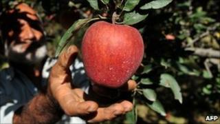 Man picking apple