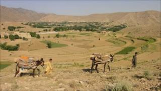 Donkeys on the Afghan border with Pakistan