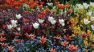 Flower bed (generic)