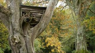 The old tree house at Plas Newydd