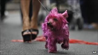 A dog painted in pink, escorted by its owner during the annual Gay Pride march in Paris, Saturday, 25 June 2011 Photo: AP