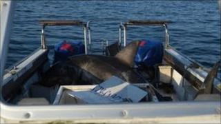 Shark on the research boat - image from Oceans Research
