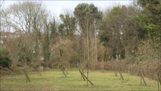Castle Woods in Mumbles