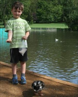 Boy feeding ducks in Priory Park