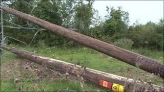 Electricity poles cut down