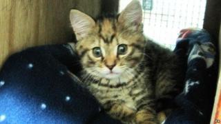 Princess the kitten
