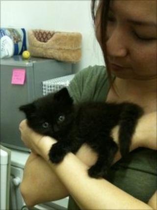 Willow Farm volunteer with a kitten