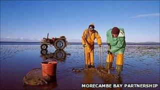 Cocklers in Morecambe Bay (Picture courtesy of Morecambe Bay Partnership)