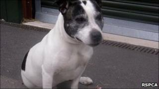 Dog dumped in Meysey Hampton