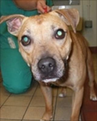 Rescued dog Blaze