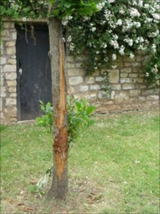 Tree damaged by a dog