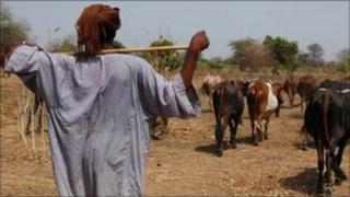 A man herds cattle in Bahr Al Ghazal, now in Southern Sudan (file image)