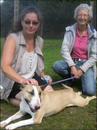 Brian, a large bull breed cross with Sue and Kate from K9 Crusaders