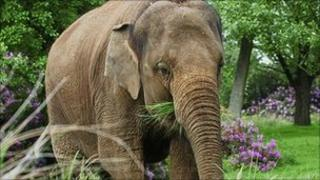 Damini the elephant