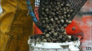 Cockles emptied into bucket