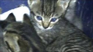 Some of the kittens found in a ditch in Barham, near Ipswich