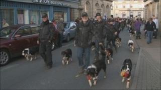 Sheepdog parade through Penrith