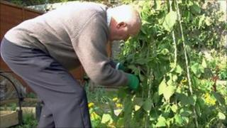 Donald Stewart picking beans