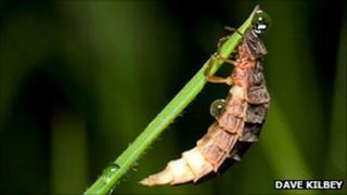 A glow worm (Photo: Dave Kilbey)