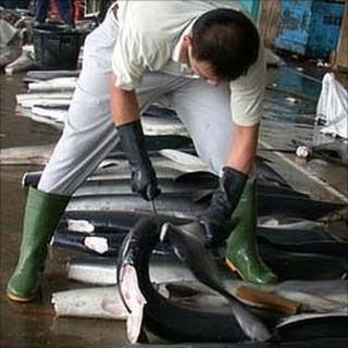 Man cuts fins from a shark