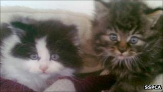 A9 kittens. Pic: Scottish SPCA