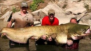 245lb catfish caught by a Somerset man in Spain