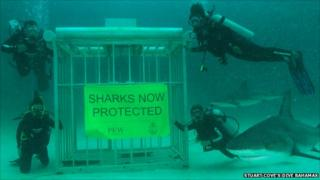 """""""Sharks now protected"""" underwater photoshoot"""