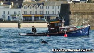 Manx Basking Shark Watch