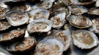 Oysters in Falmouth