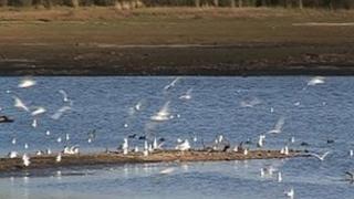Stithians reservoir, October 2011