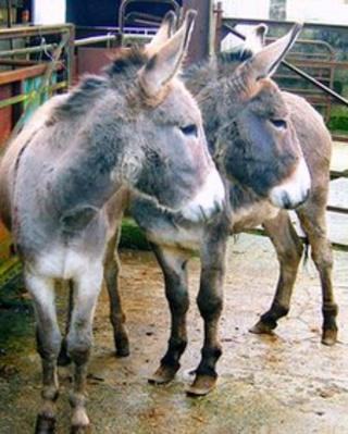 Brian and Sean the donkeys