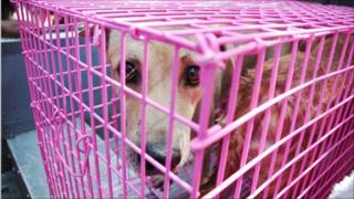 Rescued dog in cage