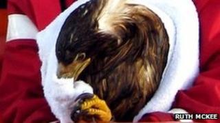 Sea eagle [Pic: Ruth McKee]