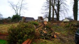 Trees cut down at Castle Manor