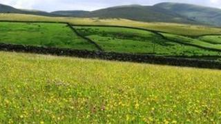 Field at Kilnmire Ravenstonedale. Photo: Cumbria Wildlife Trust