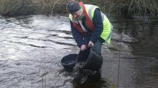 Environment Agency release sea trout into River Rede