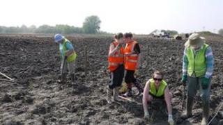 Volunteers planting reeds at Besthorpe nature reserve