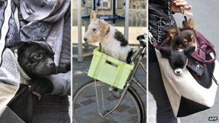 Dogs being transported around Paris in bags and on the front of a bicycle