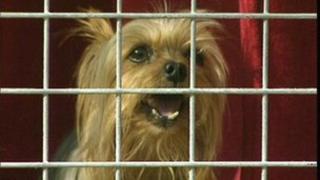 A dog in quarantine